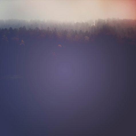 Nebel Wald